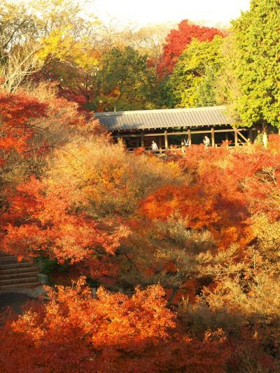 2009年京都紅葉の旅(2~3日目)