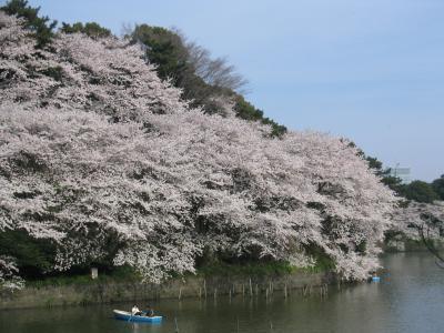 桜2003 ~東京・千鳥ヶ淵編~
