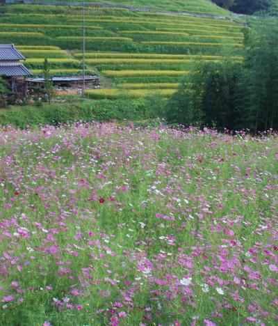 明日香村で会った花たち
