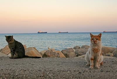 地中海猫探しの旅◎リマソール1日目CyprusCATSの歓迎◎