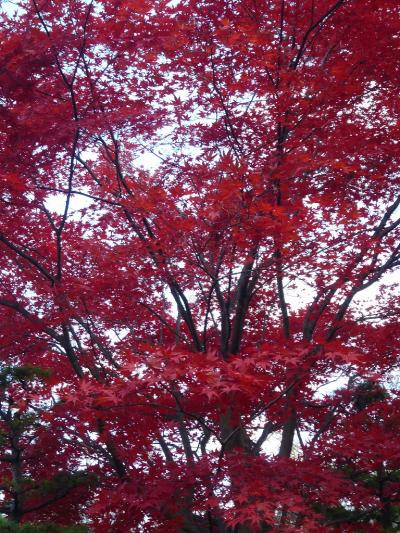 札幌・豊平公園の紅葉(2010年)