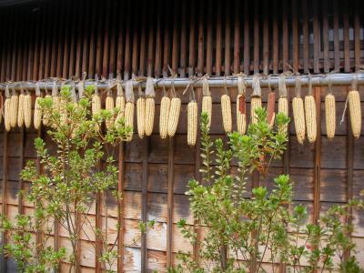 2010秋 温泉旅行 w/犬! その2 薬師温泉