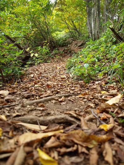 「 秋 の 里 山 を あ る く 」 小 さ な 旅 < 新潟県長岡市  >