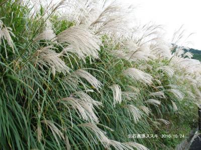 石の崇拝と生石高原の山野草
