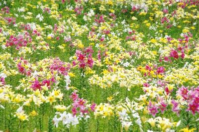 [10]ダイナランド「ゆり園」