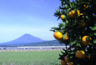 富士市内から撮った薄化粧した富士山