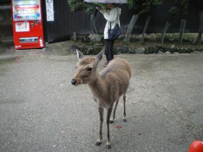 家族旅行で奈良へ