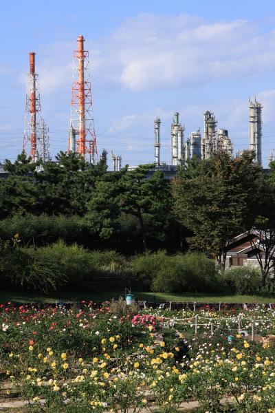 浜寺公園の秋バラ 2010 ~ 関西 バラ園
