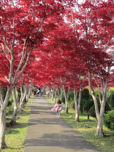 11月の札幌で17度!?≪平岡樹芸センター≫で最後の紅葉