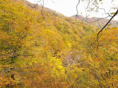 紅葉の大千軒岳登山