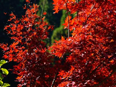 秋の定点観測 岐阜と富山の県境
