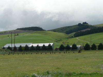 春のニュージーランド南島、駈け足の旅 ダニーデンからクィーンズタウンへ
