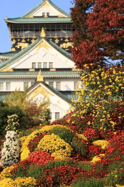秋の大阪城は菊が満開 「第47回大阪城菊の祭典」 2回目
