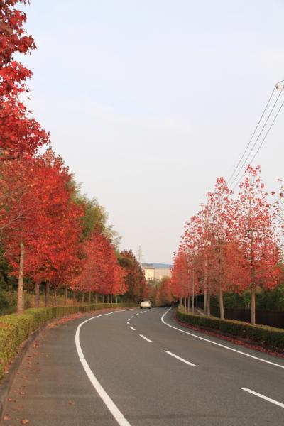 三重 鈴鹿スポーツガーデン前の並木道