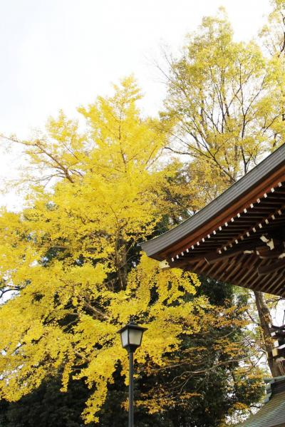 ひとり旅 [818] 安芸の国三大神社の境内、紅葉を観賞<交通安全祈願の神社'速谷神社'>広島県廿日市市