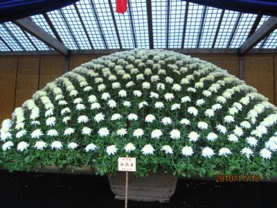 新宿御苑の菊花展。