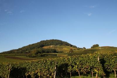 「ベルクシュトラーセ(丘街道)」(1) − ぶどう畑の丘と小さな村
