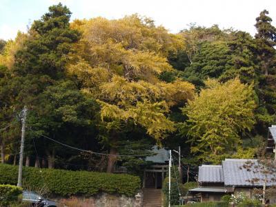 鎌倉十二所神社-2010年秋