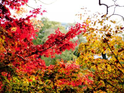 紅葉見物 in 和歌山