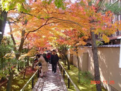 京都府 洛中の見どころ、秋の光悦寺と源光庵を訪ねて