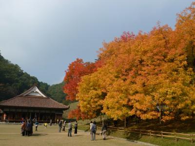 楷の木の紅葉 閑谷学校