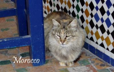 日の没する大地、マグレブの国モロッコへ! vol.1 迷宮都市フェズを歩く