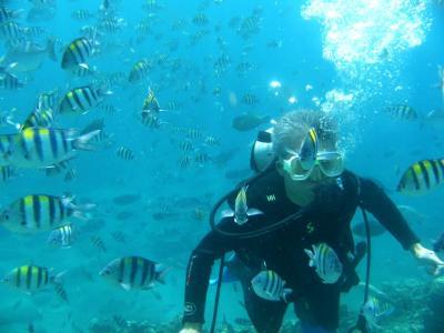 フィリピン ダイビング バタンガス サンルイス