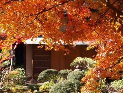 2010 根津美術館 庭園 紅葉ー下