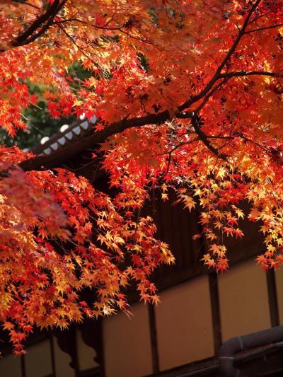 童謡の里 龍野で色とりどりの紅葉を楽しむ旅