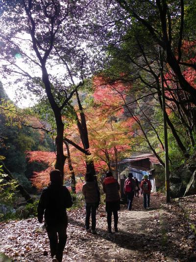 紅葉の摂津峡ハイキング(大阪府高槻市)◆京都南部&大阪東部コミュオフ会