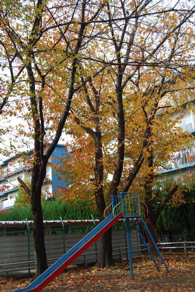 隣近所の秋の風景