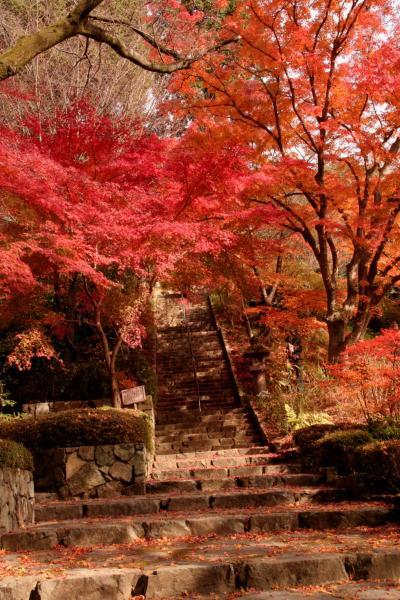 お義父さん、こんないいお天気の日は京都に行きましょうよ… えっ!大阪池田の花の寺「久安寺」の紅葉ですか…?!
