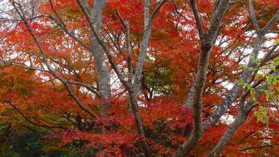 姫ノ沢公園の紅葉