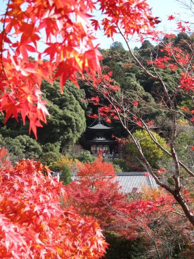 京都の寺社と紅葉2010②~秋はもみじの永観堂~