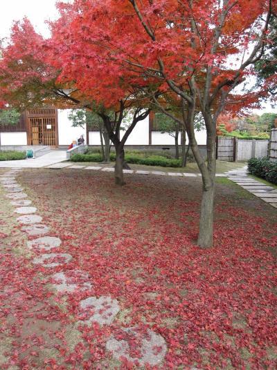 ビアンキFRETTA☆越谷花田苑の紅葉&大転倒☆2010/11/23