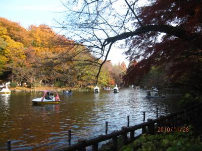 井の頭の紅葉とフリマ(2)「池に遊ぶ」。