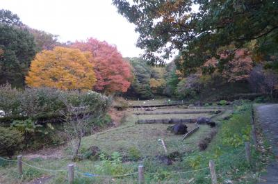 横浜 四季の森県立公園④(秋 紅葉)
