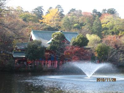 井の頭の紅葉とフリマ(4)池とお宮と紅葉と。