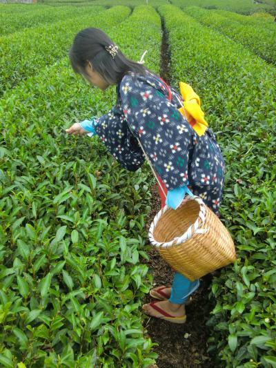 【静岡】 茶娘衣装でお茶摘み体験