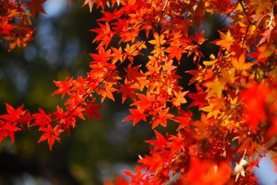 今年最後に見られた東御苑の素晴らしい紅葉②本丸跡~天守台~富士見多聞~富士見櫓