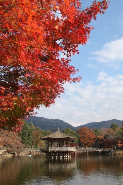 2010年奈良公園の紅葉