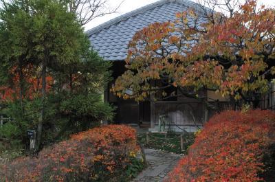 今年最後の紅葉を見に!浜寺公園。