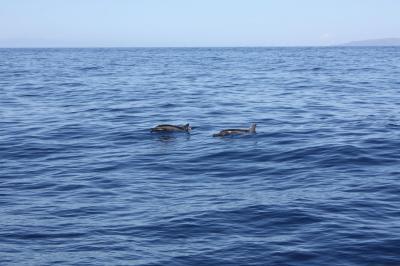 カウアイ島 2008 #2
