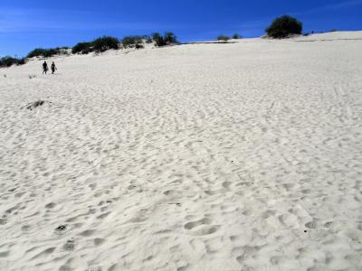 2010年バルト3国旅行第6日目(4)ニダ:トーマス・マンが「北のサハラ」と呼んだ世界遺産の白い砂丘