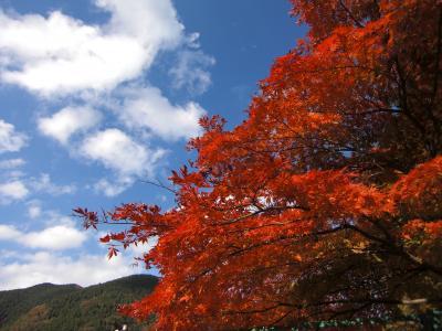 紅葉の有馬湖