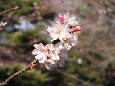 新宿御苑の新春