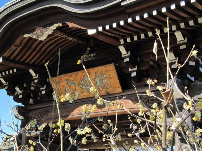 所沢ちょっと早めのロウバイめぐり(1)ロウバイ寺の全徳寺