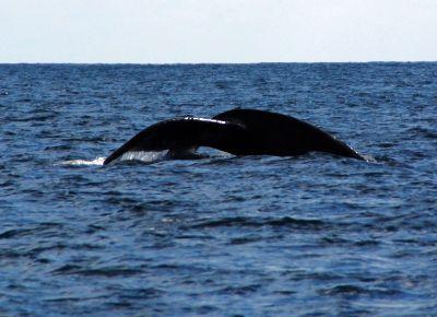 2011新年 コスタリカ旅行::Day3(12/27):カーニョ島ツアー