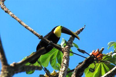 2011新年 コスタリカ旅行::Day5(12/29):マレンコロッジ付近をのんびり散策