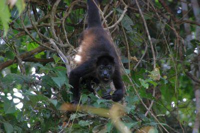 2011新年 コスタリカ旅行::Day8(01/01):カーニョネグロのあとサンホセへ
